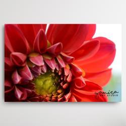 kwiaty do salonu,obraz z kwiatami,kwiaty - Ilustracje, rysunki, fotografia - Wyposażenie wnętrz