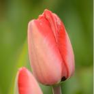 Kwiaty - foto-obrazy