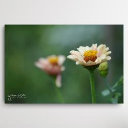 kwiaty,obraz z kwiatami,magiczny ogrod - Ilustracje, rysunki, fotografia - Wyposażenie wnętrz