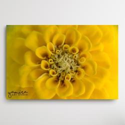 kwiaty do salonu,makro fotografia,kwiat - Ilustracje, rysunki, fotografia - Wyposażenie wnętrz