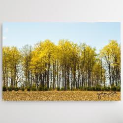drzewa,natura,pejzaz,landscape,trees,prezent - Obrazy - Wyposażenie wnętrz