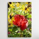 Ilustracje, rysunki, fotografia kwiaty do salonu,obraz z kwiatami,kolorowe kwiaty