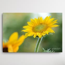 sloneczniki,kwiaty do salonu,obraz z kwiatami - Ilustracje, rysunki, fotografia - Wyposażenie wnętrz