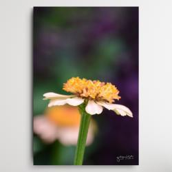 kwiaty do salonu,obraz z kwiatami,kwiaty - Obrazy - Wyposażenie wnętrz