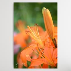 kwiaty,obraz z kwiatami,kwiaty do salonu - Ilustracje, rysunki, fotografia - Wyposażenie wnętrz