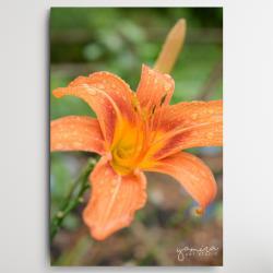 lilie,kwiaty do biura,kwiaty do salonu - Ilustracje, rysunki, fotografia - Wyposażenie wnętrz