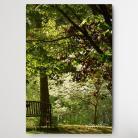 Ilustracje, rysunki, fotografia park,drzewa,romantycznie,bajkowo,pejzaz,natura