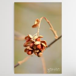 owoce,jagody,suszone,susz,fotografia,obraz,natur - Obrazy - Wyposażenie wnętrz