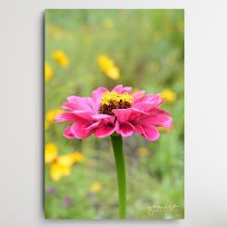 obraz z kwiatami,magiczny ogrod,kwiaty do salonu - Obrazy - Wyposażenie wnętrz