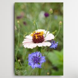 kolorowe kwiaty,polne kwiaty,kwiaty do salonu - Ilustracje, rysunki, fotografia - Wyposażenie wnętrz